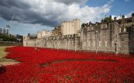 Red Flowers Around Tower Of London 35 Cool Hd Wallpaper