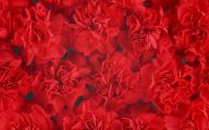 Red Flowers Background 2 Cool Wallpaper