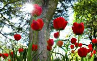 Red Flowers Background 21 Hd Wallpaper