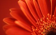 Red Flowers Background 22 High Resolution Wallpaper
