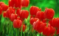 Red Flowers Background 3 Desktop Background