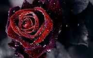 Red Flowers Background 33 Background Wallpaper