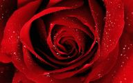 Red Flowers Background 5 Cool Wallpaper