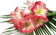 10 Red Flowers Bouquet Cool Wallpapers