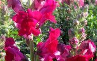 Red Flowers Bulk 17 Free Wallpaper