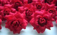 Red Flowers Bulk 5 Desktop Background