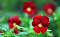Red Flowers By Name 1 Free Wallpaper