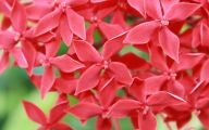Red Flowers By Name 4 Widescreen Wallpaper