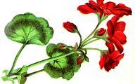 Red Flowers Clipart 11 Widescreen Wallpaper