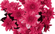 Red Flowers Clipart 28 Cool Hd Wallpaper