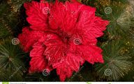 Red Flowers For Christmas 15 High Resolution Wallpaper