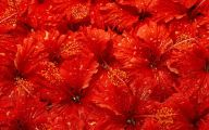 Red Flowers For Christmas 21 Cool Wallpaper