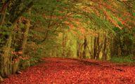 Red Flowers List 9 Cool Hd Wallpaper