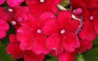 Red Flowers Pictures 43 Cool Hd Wallpaper