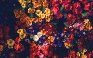 Red Flowers Tumblr 35 Widescreen Wallpaper