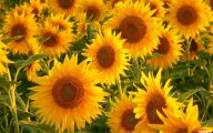 Types Fall Yellow Flowers 24 Cool Wallpaper