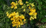 Types Fall Yellow Flowers 27 Widescreen Wallpaper