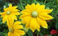 Types Fall Yellow Flowers 37 Cool Wallpaper