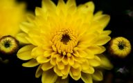 Types Fall Yellow Flowers 5 Widescreen Wallpaper