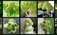 Types Of Green Flowers 14 Hd Wallpaper