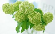 Types Of Green Flowers 16 Free Wallpaper