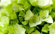 Types Of Green Flowers 18 Free Wallpaper