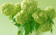 Types Of Green Flowers 19 Widescreen Wallpaper
