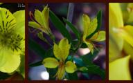 Types Of Green Flowers 22 Hd Wallpaper