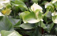 Types Of Green Flowers 9 Free Hd Wallpaper