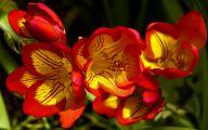 Types Of Red Flowers 1 Desktop Background