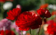 Types Of Red Flowers 13 Free Wallpaper