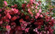 Types Of Red Flowers 14 Free Hd Wallpaper