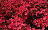 Types Of Red Flowers 15 Desktop Wallpaper