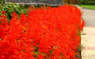 Types Of Red Flowers 18 Widescreen Wallpaper