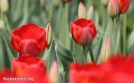 Types Of Red Flowers 22 Free Hd Wallpaper