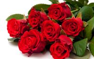 Types Of Red Flowers 3 Cool Hd Wallpaper