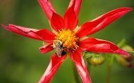 Types Of Red Flowers 4 Desktop Background