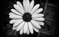 What Flowers Are Black 6 Desktop Wallpaper