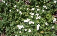 White Flowers And Names 6 High Resolution Wallpaper