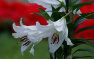 White Flowers At Christmas 34 Widescreen Wallpaper