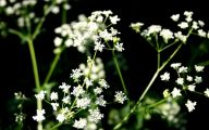 White Flowers Available In November 20 Widescreen Wallpaper
