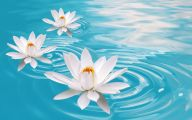 White Flowers Available In November 24 Cool Hd Wallpaper