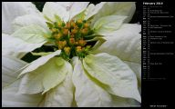 White Flowers Available In November 27 Background Wallpaper
