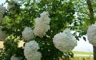 White Flowers Birmingham Al 32 Cool Hd Wallpaper