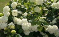 White Flowers Farm 11 Background