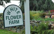 White Flowers Farm 23 High Resolution Wallpaper