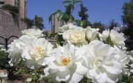 White Flowers For Flower Beds 34 Free Hd Wallpaper