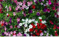 White Flowers For Flower Beds 37 Wide Wallpaper