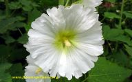 White Flowers Pictures 10 Widescreen Wallpaper