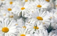 White Flowers Pictures 15 Widescreen Wallpaper